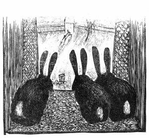 4-1 Kaninchen